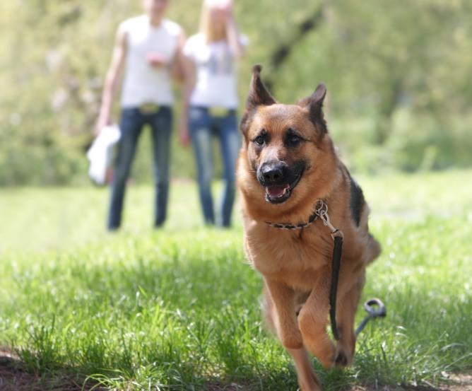 Berliner Hund Leinenpflicht Leinenzwang