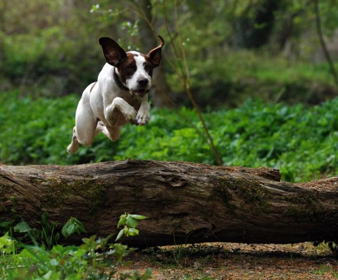 Tierkrankenversicherung: Rundumschutz für Vierbeiner