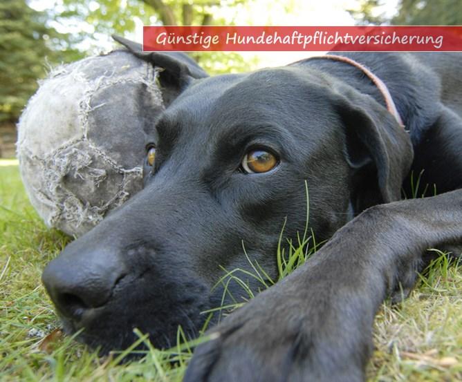 Versicherungsmakler Hundehaftpflichtversicherung vergleichen