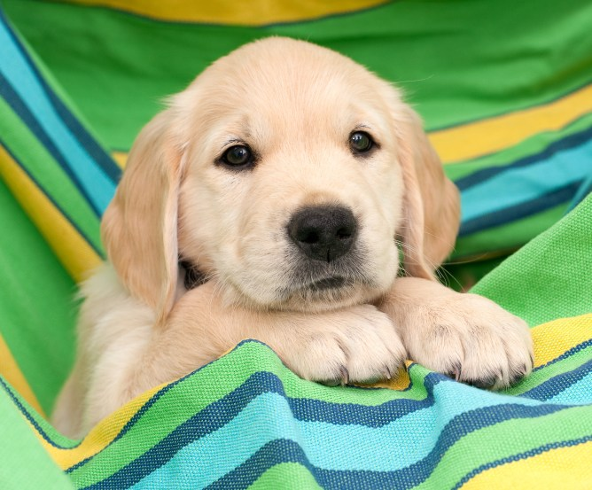 Barmenia-Operationskostenversicherung für Hunde