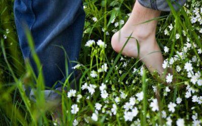 Welche Pflanzen helfen gegen Zecken?