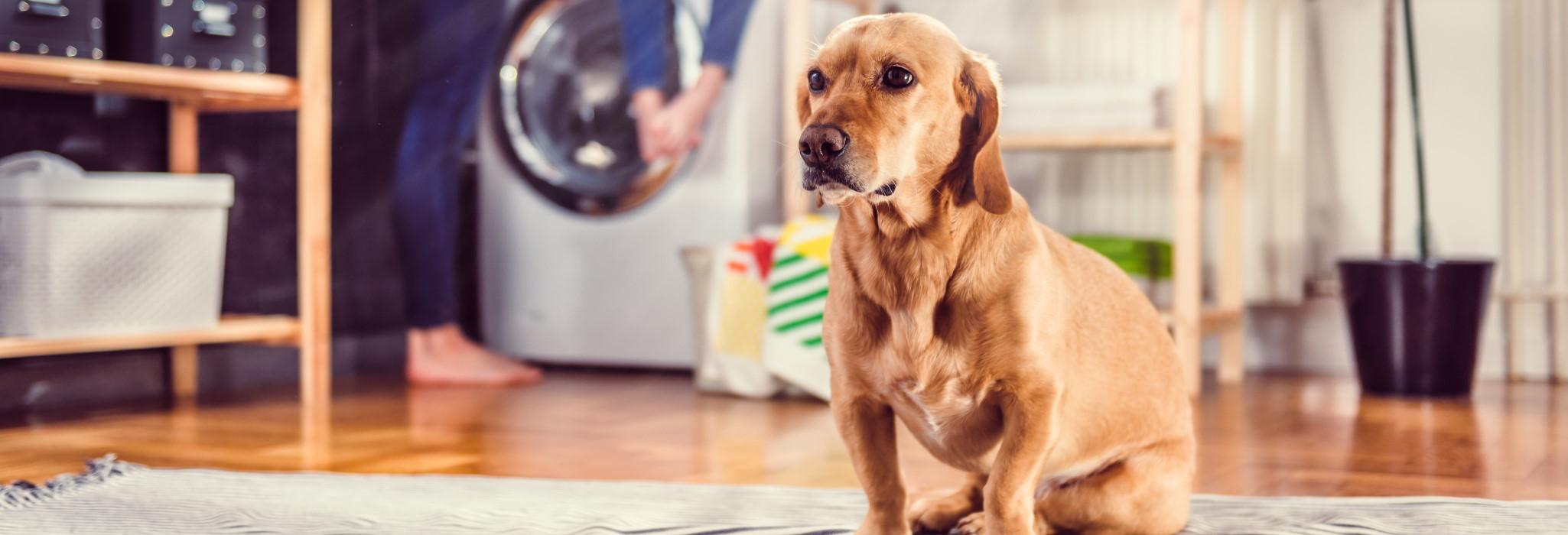 Tierhaftpflichtversicherung Hund