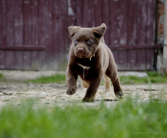 Tierhaftpflichtversicherung Hundehalter © Franziska Stein